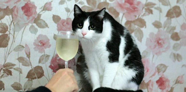 Como degustar vinho: aprenda em apenas 3 passos