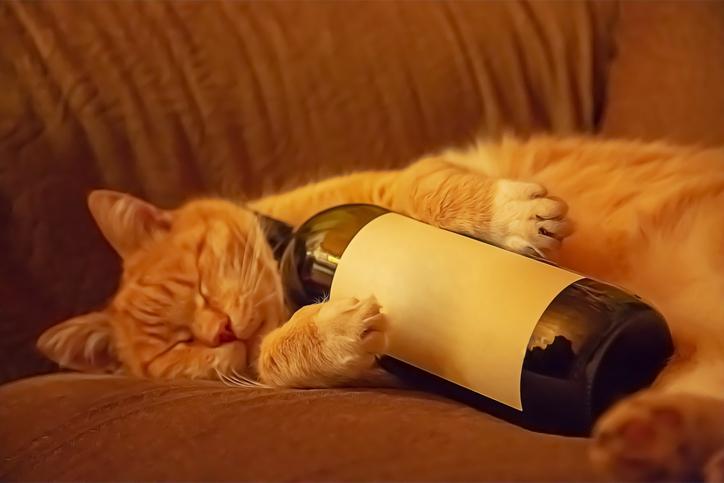 Como ler rótulos de vinhos: exemplos práticos pra você aprender de vez