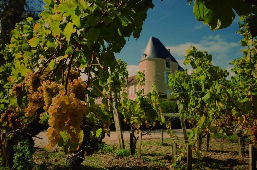 Vinhos de Bordeaux: aprenda mais sobre essa região rara e única