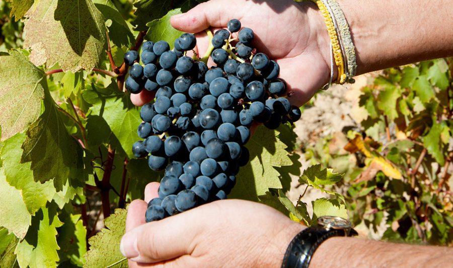 Vinhos finos e vinhos de mesa: aprenda a diferença entre eles
