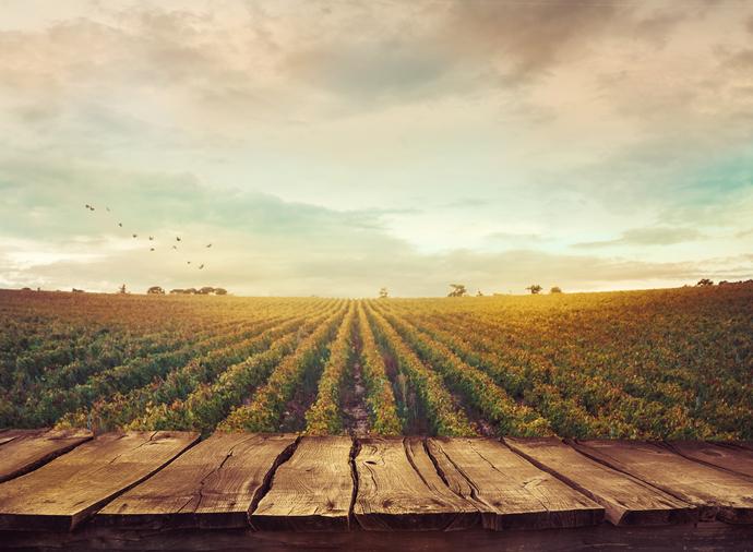 O que é Vinho Verde: desvendando os mistérios desse nome