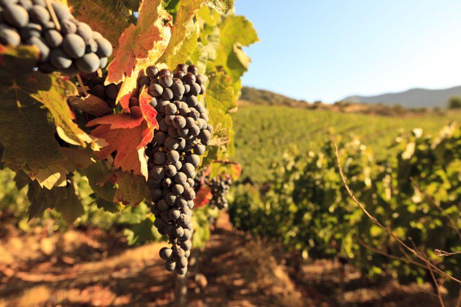 Você sabe qual a temperatura ideal na hora de servir um vinho?
