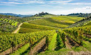 Colinas na região de Chianti coberta de vinhedos