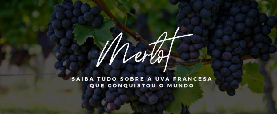 Vinho Merlot características: Saiba tudo sobre a uva francesa que conquistou o mundo