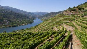 Colina na beira do rio Douro coberta de por uma plantação de vinhas