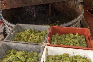 Caixas com uvas brancas na frente e atrás uma prensa de uvas
